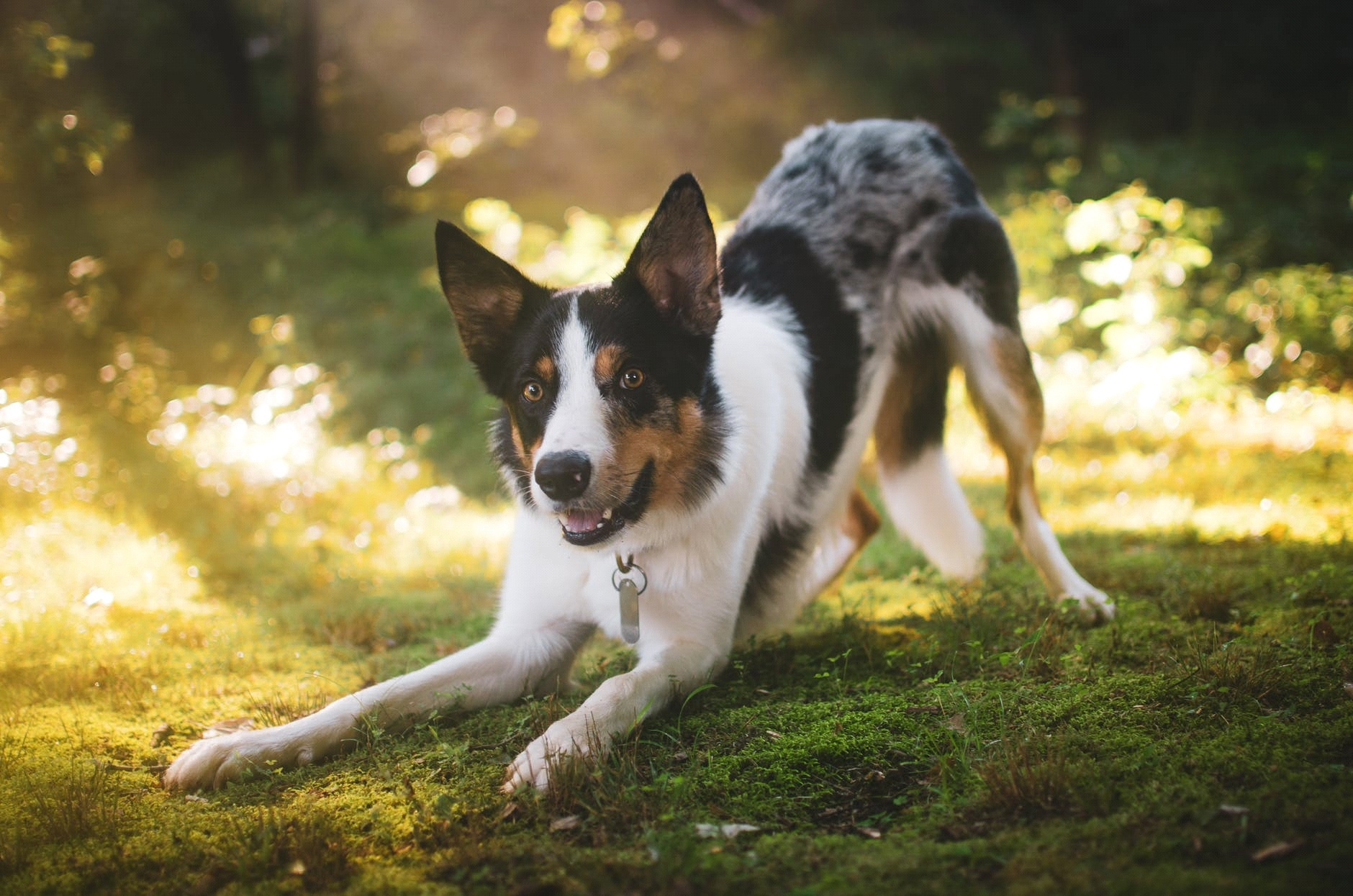 BREEDS OF BEST GUARD DOGS