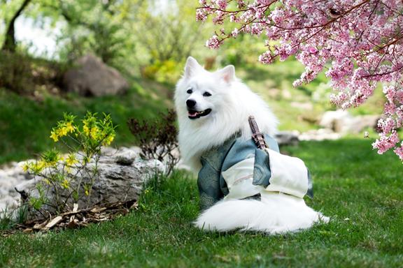 SHAM YOUR DOG FEW SIMPLE COMMANDS