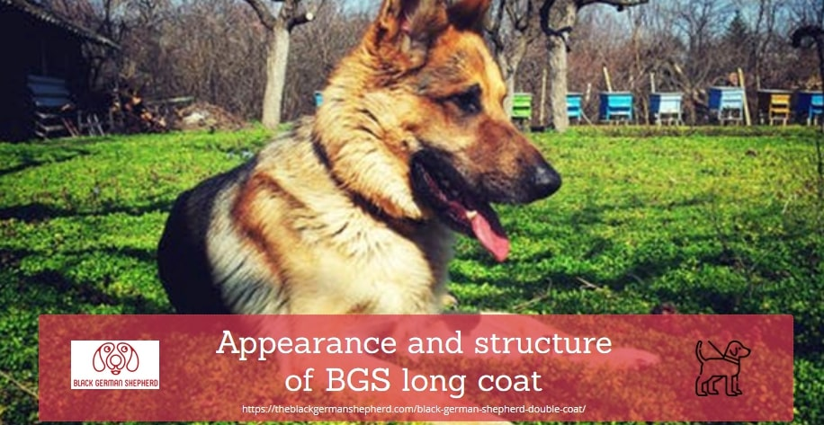 Appearance and structure of BGS