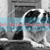 Black German Shepherd baby
