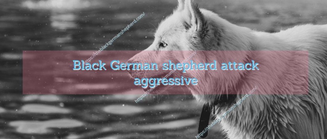 Black German shepherd attack aggressive