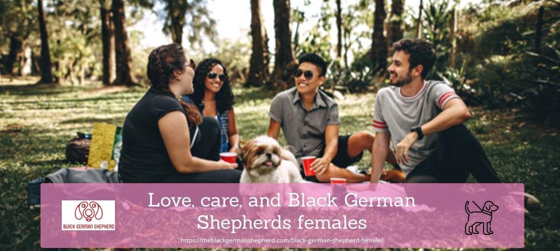 Love, care, and Black German Shepherds females