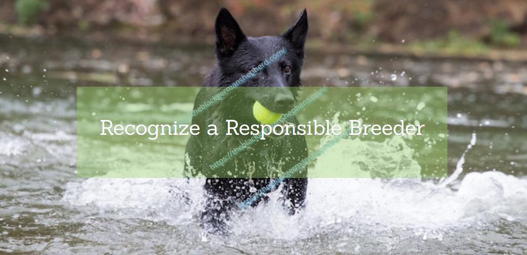 Recognize a Responsible Breeder