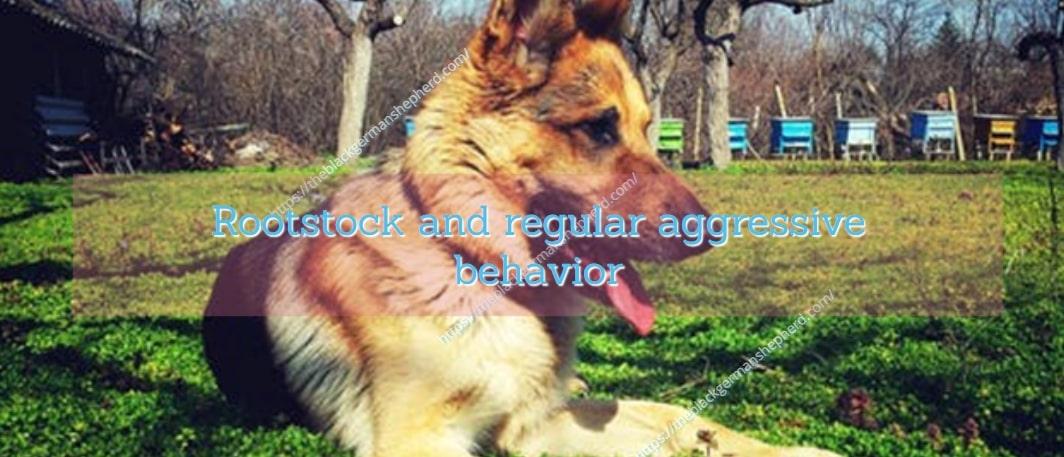 Rootstock and regular aggressive behavior