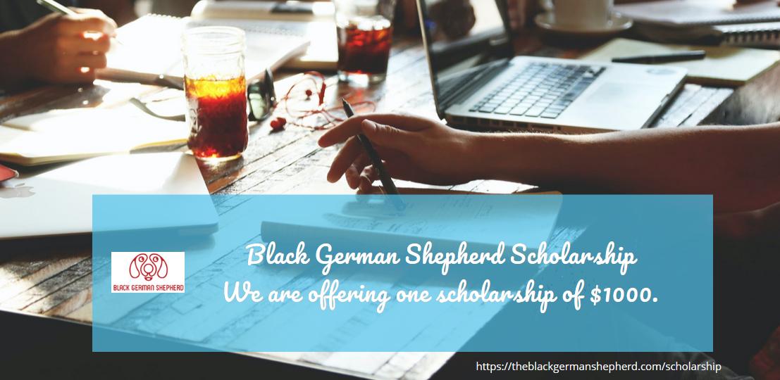 Black German Shepherd Scholarship