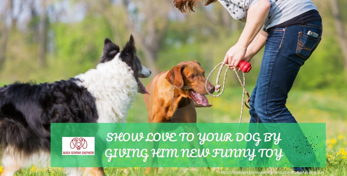 SHOW LOVE TO YOU DOG BY GIVING HIM NEW FUNNY TOY