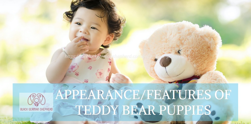 APPEARANCE FEATURES OF TEDDY BEAR PUPPIES
