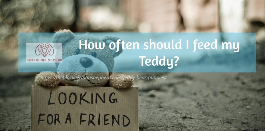 teddy food