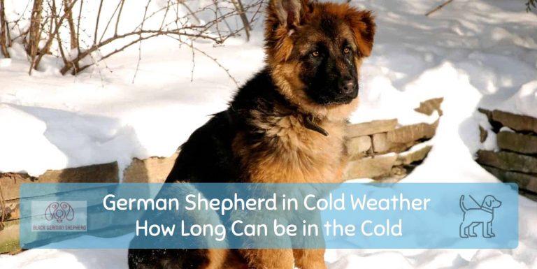 German Shepherd in Cold Weather