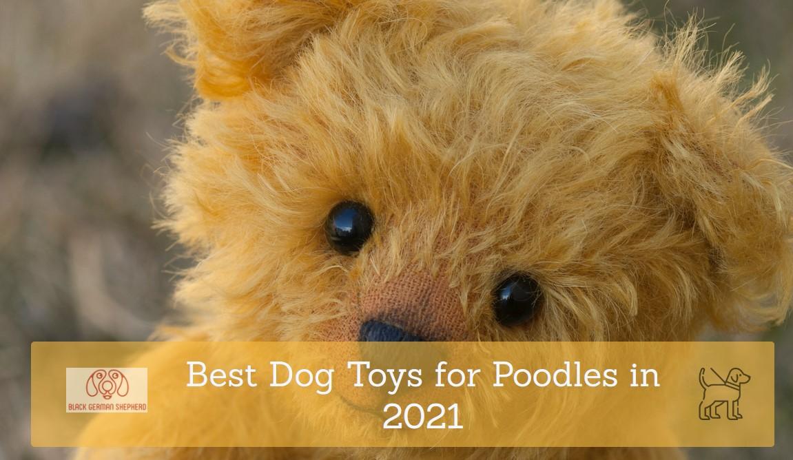 Best Dog Toys for Poodles in 2021